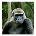 Impresión del perfil del gorila impresiones