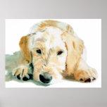 Impresión del perrito de Labradoodle Póster