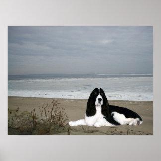 Impresión del perro de aguas de saltador inglés impresiones