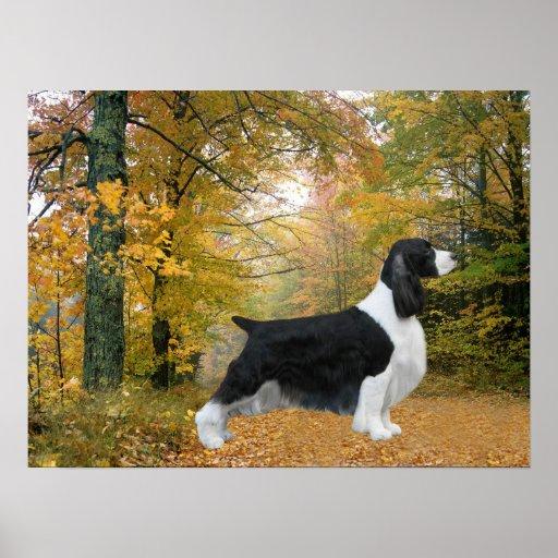 Impresión del perro de aguas de saltador inglés póster