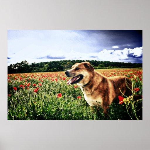 Impresión del perro de campos de la amapola posters