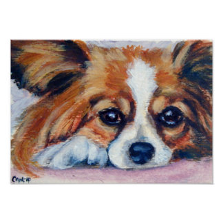 Impresión del perro de Papillon Poster