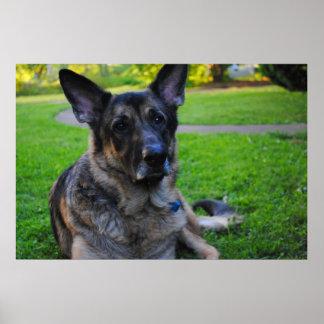 Impresión del perro de pastor alemán