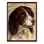 Impresión del perro de Spanial del cocker Tarjeta Postal