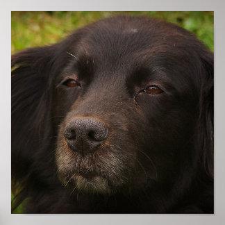 Impresión del perro negro