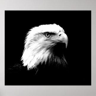 Impresión del poster de Eagle calvo American Eagle