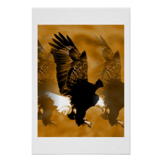 Impresión del poster de Eagle calvo - posters de A