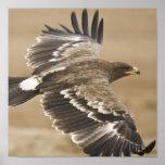 Impresión del poster de Eagle del vuelo