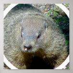 Impresión del poster de Groundhog