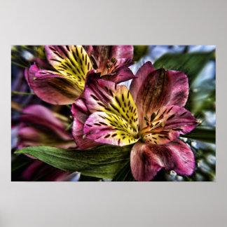 Impresión del poster de la flor del lirio peruano