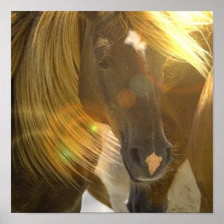 Impresión del poster de la foto del caballo salvaj