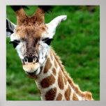 Impresión del poster de la jirafa