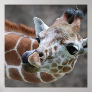 Impresión del poster de la lengua de la jirafa