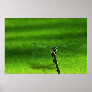Impresión del poster de la libélula de la charca
