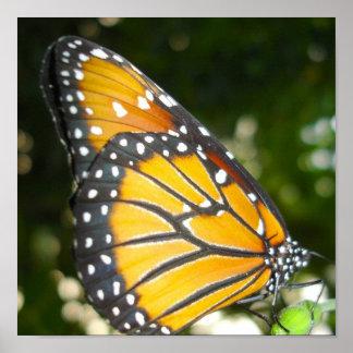 Impresión del poster de la mariposa de monarca