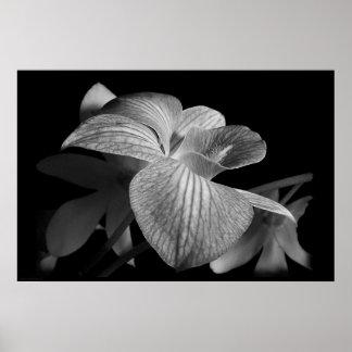Impresión del poster de la orquídea 1 del Dendrobi