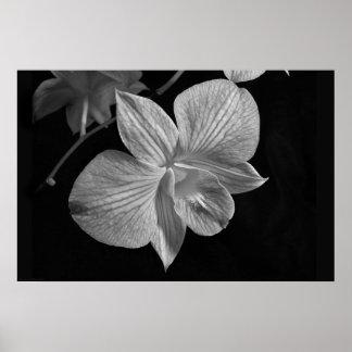 Impresión del poster de la orquídea 2 del Dendrobi