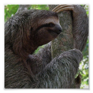Impresión del poster de la pereza del árbol que su