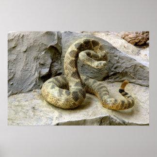 Impresión del poster de la serpiente de cascabel d