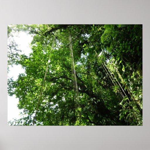 Impresión del poster de las cuerdas de la selva
