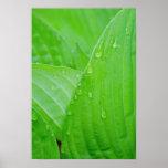 Impresión del poster de las hojas y de las gotitas