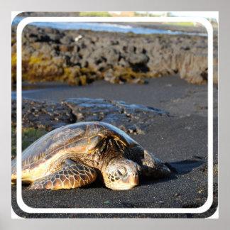 Impresión del poster de las tortugas de mar