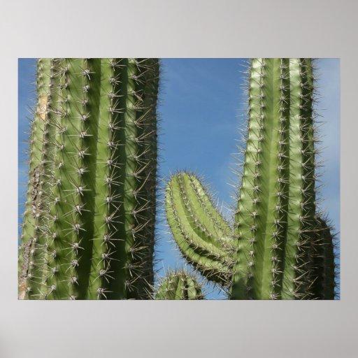 Impresión del poster de los cactus de barril