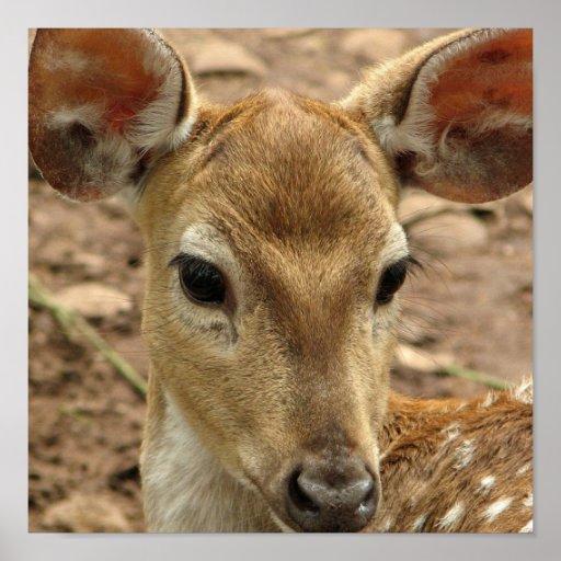 Impresión del poster de los ciervos de Bambi