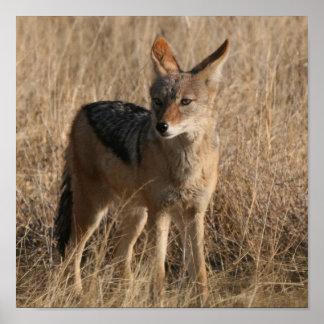 Impresión del poster de los coyotes del bebé