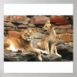 Impresión del poster de los pares del león