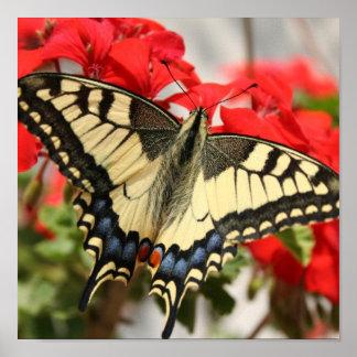 Impresión del poster de Swallowtail del anís