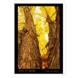 Impresión del poster del árbol de arce tres postal