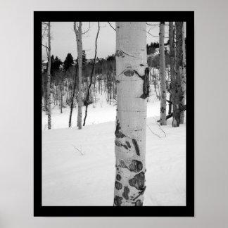 Impresión del poster del árbol de Colorado Aspen