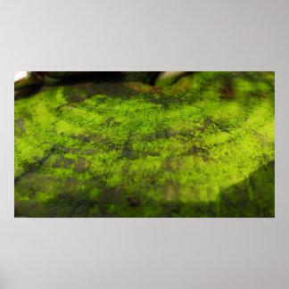 Impresión del poster del arte del musgo