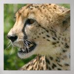 Impresión del poster del ataque del guepardo