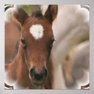 Impresión del poster del bebé del caballo