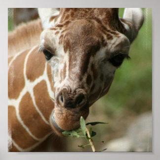 Impresión del poster del bocado de la jirafa