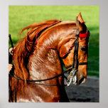 Impresión del poster del caballo de Saddlebred del