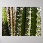 Impresión del poster del cactus de barril