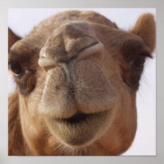 Impresión del poster del camello