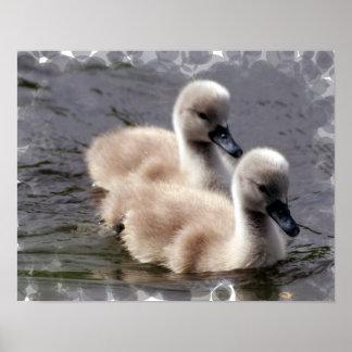 Impresión del poster del cisne del bebé