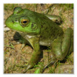 Impresión del poster del diseño de la rana
