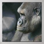 Impresión del poster del gorila de montaña
