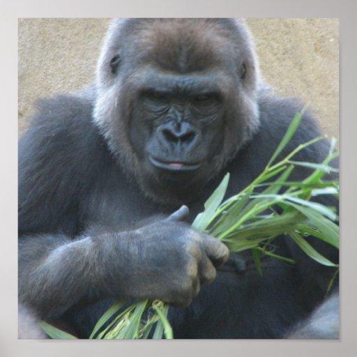 Impresión del poster del gorila del Silverback