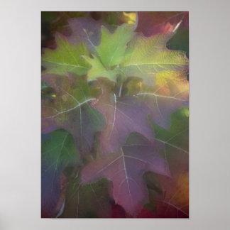 Impresión del poster del Hydrangea de la hoja del