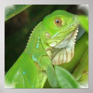 Impresión del poster del lagarto verde