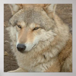 Impresión del poster del lobo