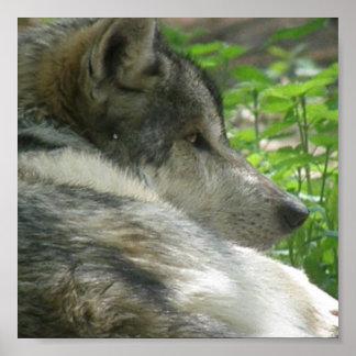 Impresión del poster del lobo de madera