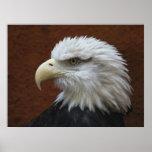 Impresión del poster del pájaro de Eagle