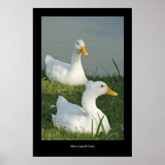 Impresión del poster del pato de Campbell